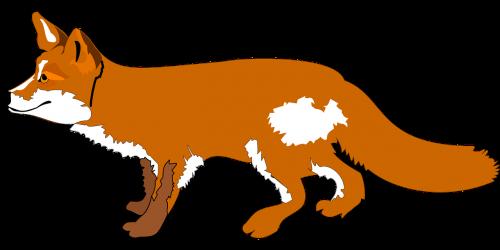 fox animal wildlife