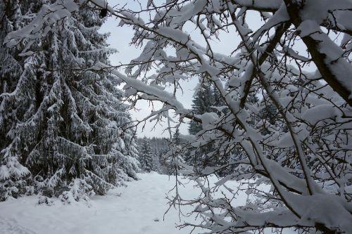 fox chewed winter snow