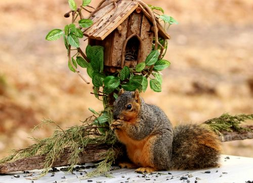 Fox Squirrel And Bird House
