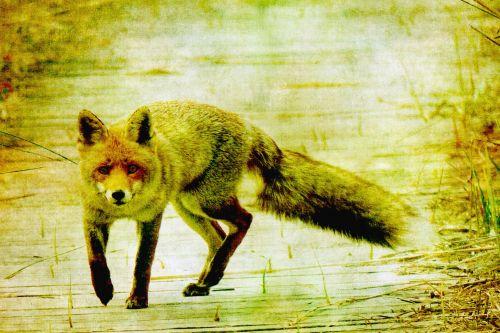 Fox Vintage Painting