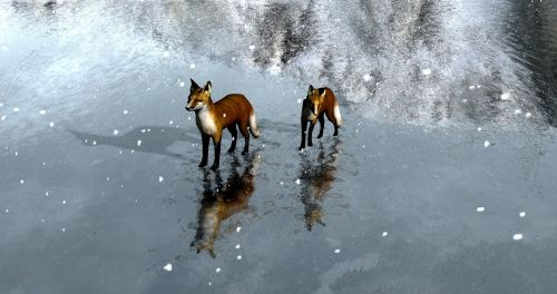 foxes ice landscape