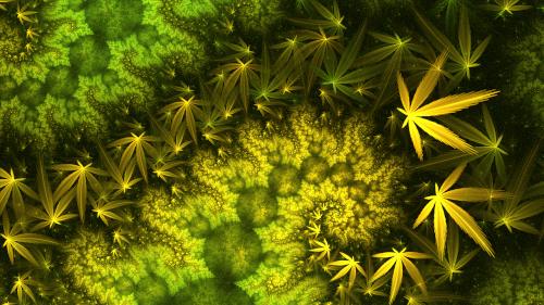 fractal mobius dragon marijuana