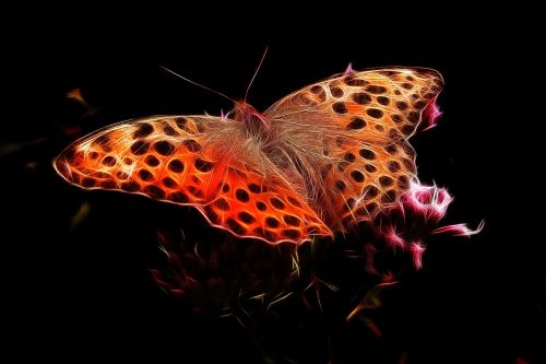 fractalius,fiery mother-of-pearl moth,edelfalter,butterfly,fiery,free illustrations
