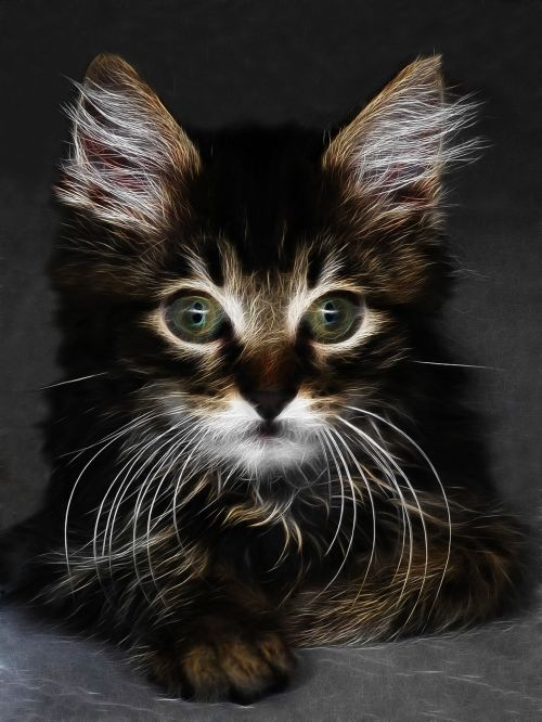 fractalius cat animal