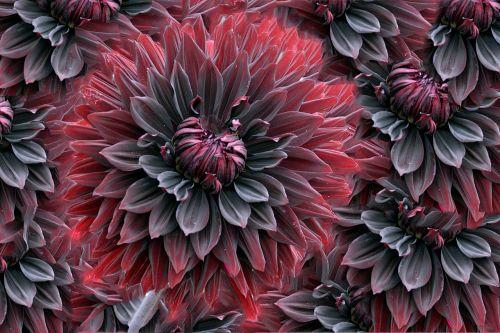 fractals pattern design