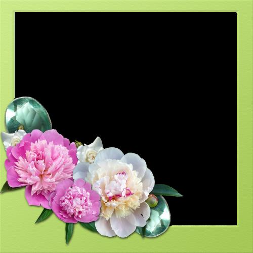 frame peony roses