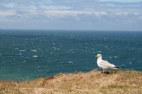 france seagull ocean