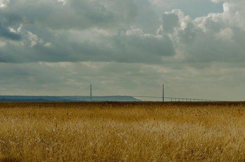 france  landscape  reed bed