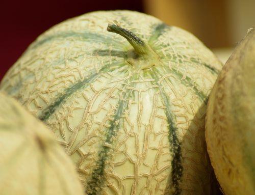 france melons fruit
