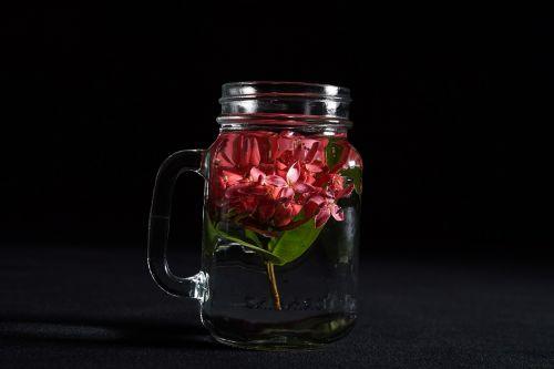 frangipani buds plumeria buds in a cup