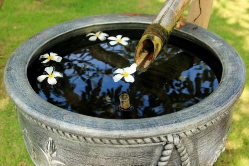 frangipani flowers flowers exotic