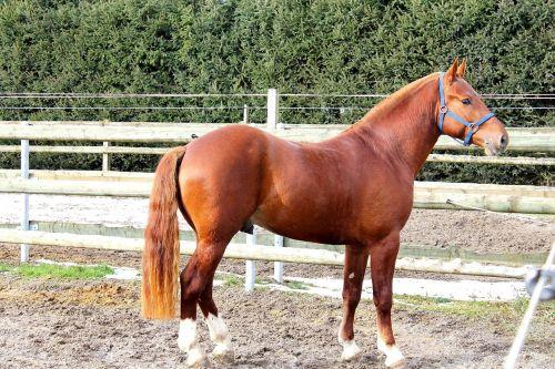 frank mountain horse switzerland