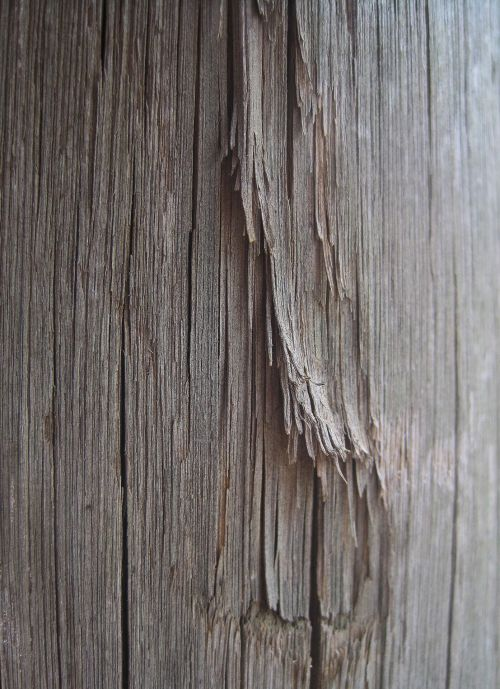 Frayed Wooden Pole