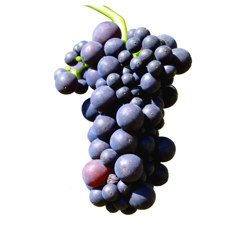 isolated grapes henkel