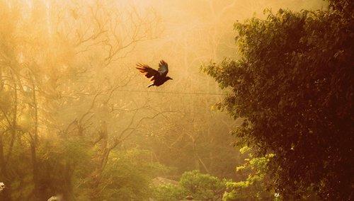 free bird  freedom  alone
