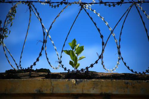 freedom prison jail