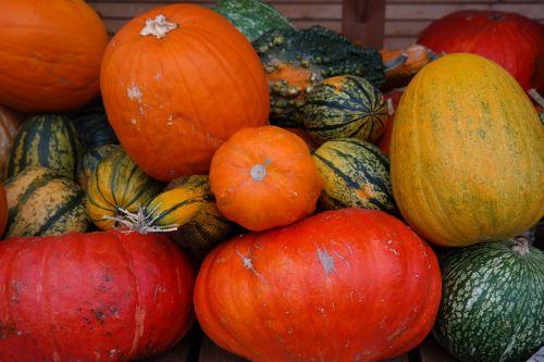 Freestyle įkandimas,oranžinė,žalias,pardavimas,veislės,rūšis,moliūgų veislės,moliūgų rūšis,daržovės,raudona zentner,Halloween,ruduo,aspen,Auksinė širdis,de siam,cucurbita ficifolia,figų lapų moliūgas