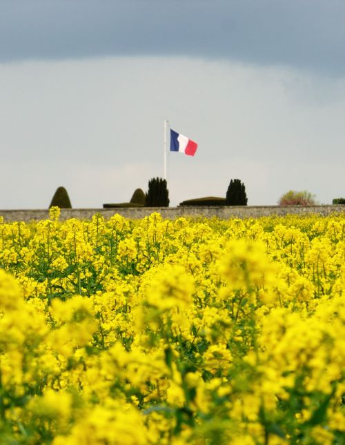 french flag flowers yellow