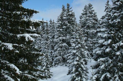 french-speaking switzerland snow trees