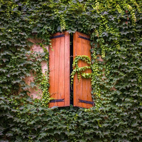 french windows  ivy  greenery