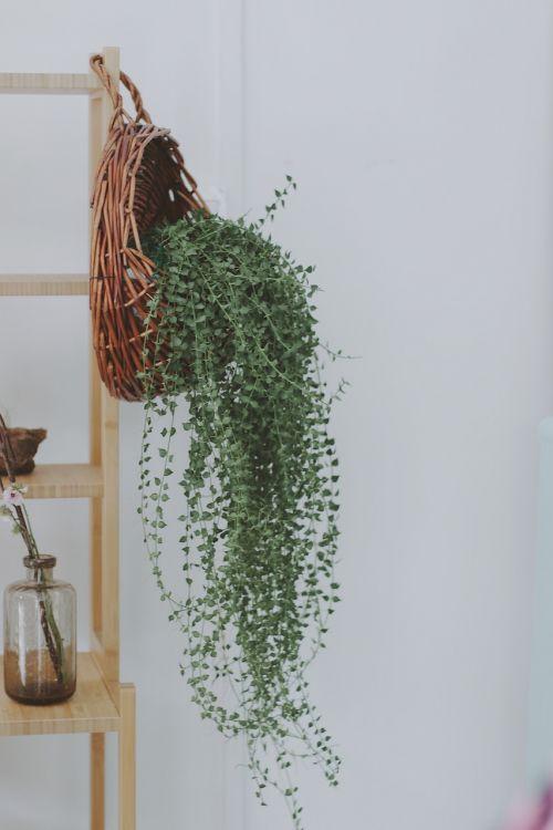fresh household plant