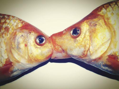 fresh fish bream