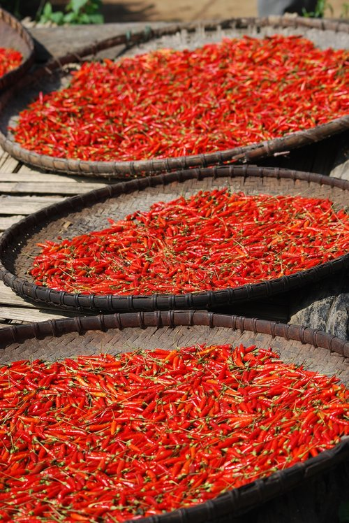 fresh chilli  red  dried chilli