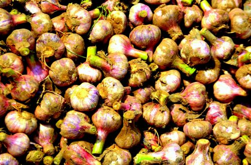 Fresh Cut Garlic