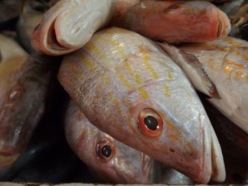 fresh fish market food