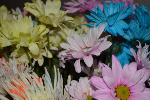geltona, rozės, meilė, gėlė, fonas, taika, žiedlapis, žiedas, Sveik, pasiilgau tavęs, Vestuvės, makro, šviežios floros makro daisy žydi