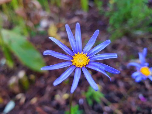 fresh flower smartphone photography samsung galaxy s8 photography