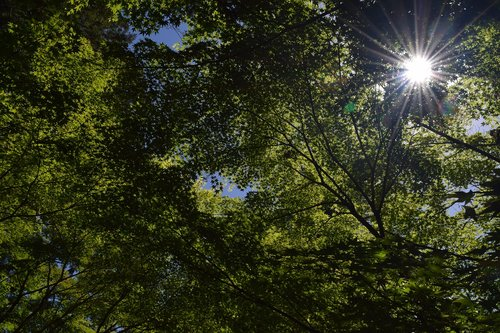 fresh green  sunbeams