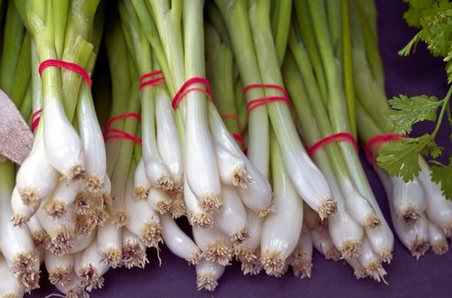 fresh green onion bunches  vegetables  food