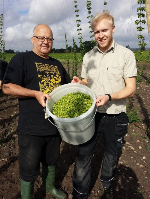 fresh hops craft brewing local beer