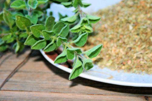 Fresh Origanum And Dried Herbs