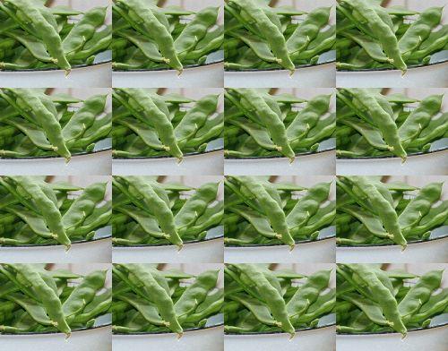 Freshly Picked Beans Wallpaper