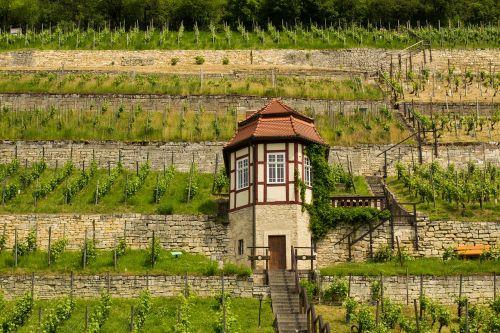 freyburg unstrut wine wine growing area