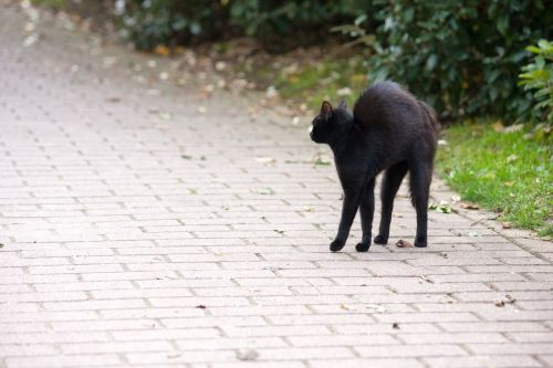 friday 13 hypnosis cat