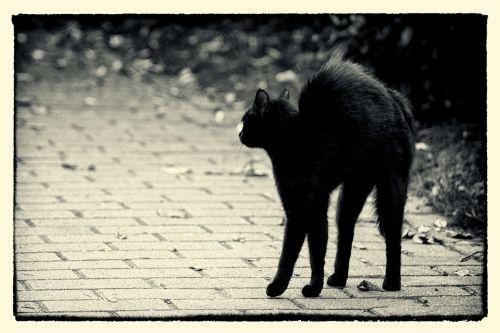 friday 13 hypnosis black cat