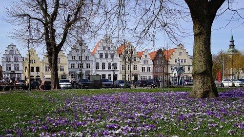 Friedrichstadt, Crocus, Crocus gėlių, Meklenburgas, Šiaurės jūros pakrantė, Olandų miesto, gėlė