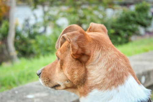 friend dog breed