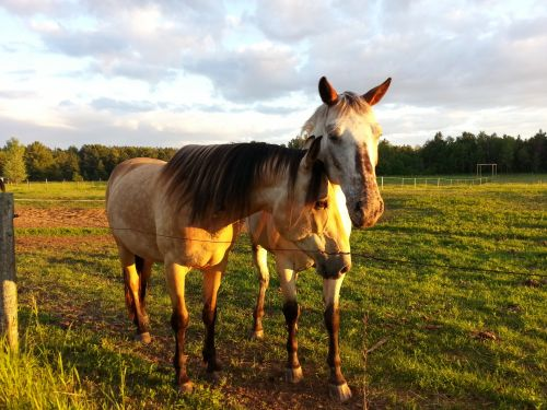 arklys, arklys, Jodinėjimas, gyvūnas, Draugystė, bendravimas, kraštovaizdis, Draugystė