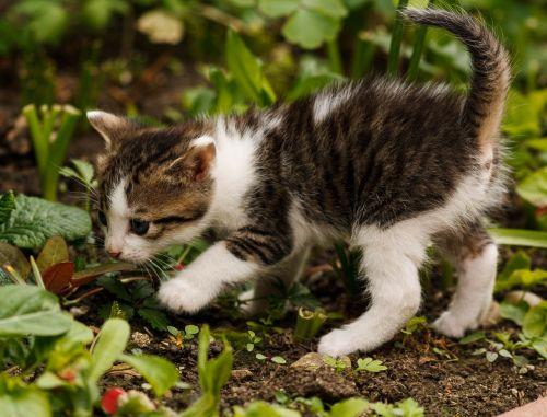 Draugystė,katė,mažas katinas,gyvūnas,kačiukas