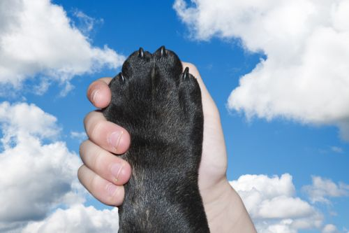 Friendship Dog Love