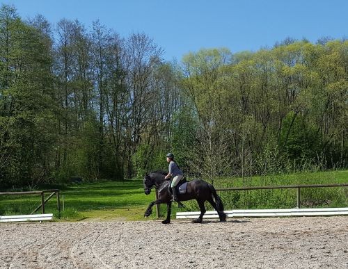 friese horsewoman gallop
