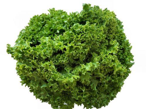 friseesalat salad green