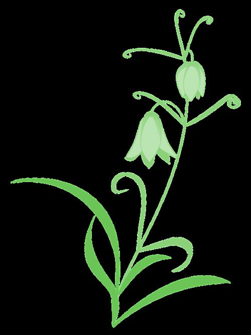 fritillaria lily green