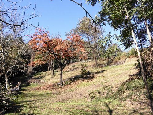 friuli walk garden