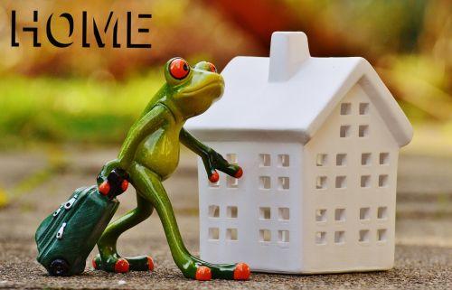 frog arrive home