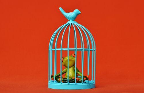 frog cage imprisoned